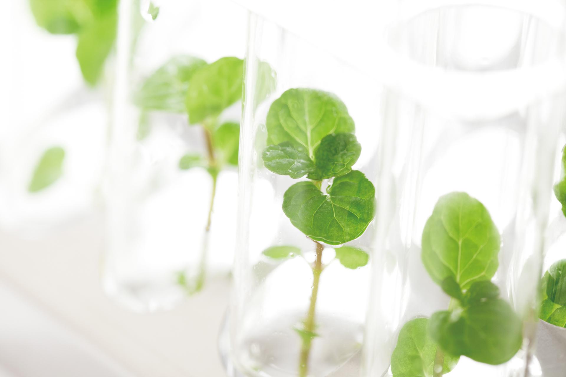 テクノロジー 植物 バイオ