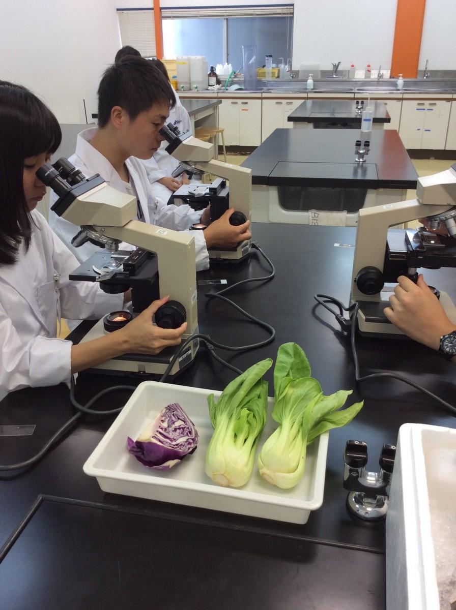 真剣に顕微鏡をのぞいて、野菜の細胞融合を観察しています!